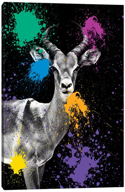 Safari Color Pop Series: Antelope Impala Canvas Art Print