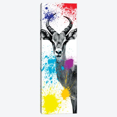 Antelope Impala II Canvas Print #PHD218} by Philippe Hugonnard Canvas Art Print