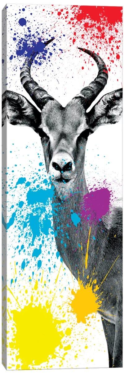 Safari Color Pop Series: Antelope Impala II Canvas Print #PHD218