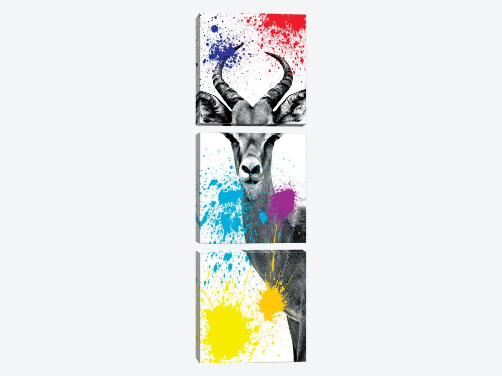 Safari Color Pop Series: Antelope Impala II by Philippe Hugonnard 3-piece Canvas Wall Art
