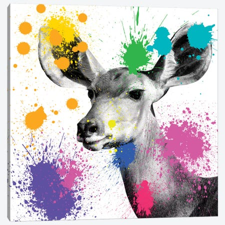 Antelope Portrait II Canvas Print #PHD219} by Philippe Hugonnard Art Print