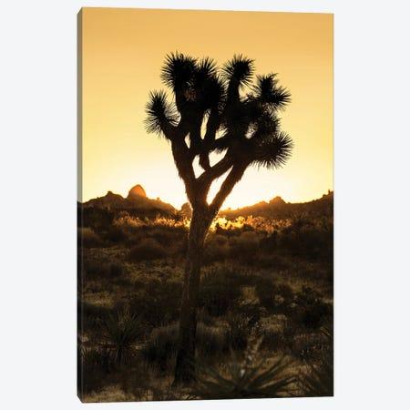 American West - Joshua Sunset Canvas Print #PHD2214} by Philippe Hugonnard Canvas Art Print