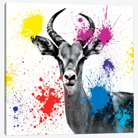 Antelope Reedbuck III Canvas Print #PHD227} by Philippe Hugonnard Canvas Art Print