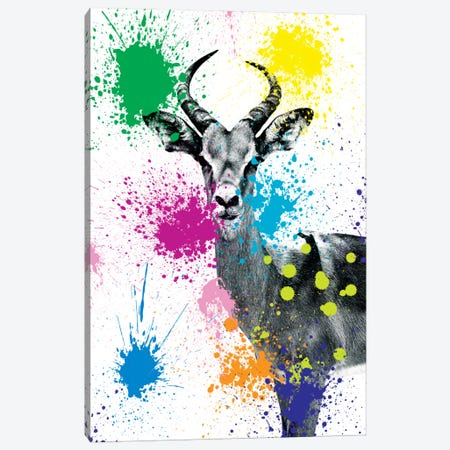 Antelope Reedbuck V Canvas Print #PHD228} by Philippe Hugonnard Canvas Artwork