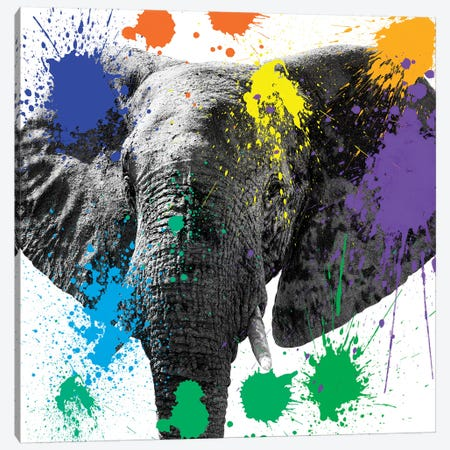 Elephant II Canvas Print #PHD229} by Philippe Hugonnard Canvas Art