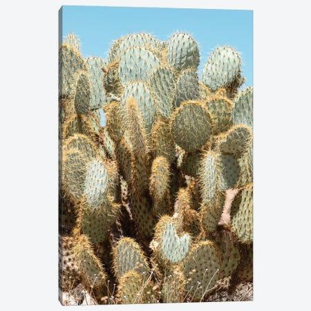 American West - Cacti Canvas Print #PHD2305} by Philippe Hugonnard Canvas Art Print