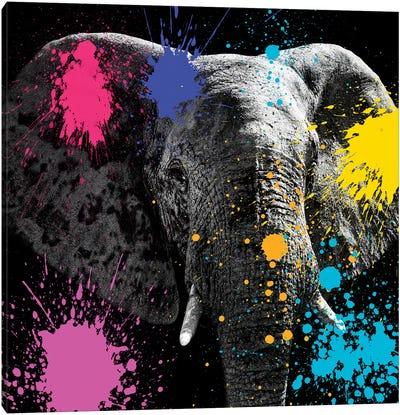 Safari Color Pop Series: Elephant III Canvas Print #PHD230