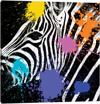 Safari Color Pop Series: Zebra Portrait II Canvas Art Print