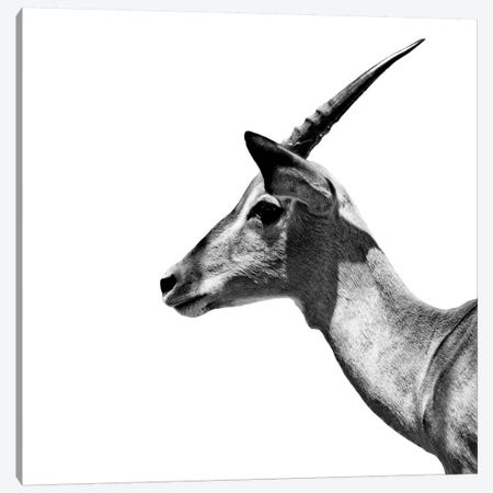 Antelope Impala White Edition III Canvas Print #PHD252} by Philippe Hugonnard Canvas Print