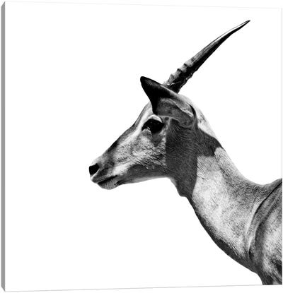 Safari Profile Series: Antelope Impala White Edition III Canvas Art Print