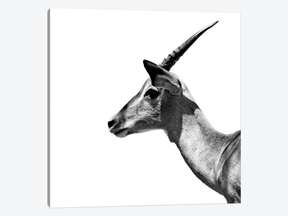 Safari Profile Series: Antelope Impala White Edition III by Philippe Hugonnard 1-piece Canvas Art