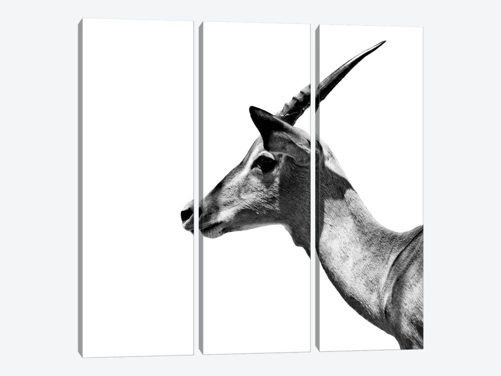 Safari Profile Series: Antelope Impala White Edition III by Philippe Hugonnard 3-piece Canvas Art