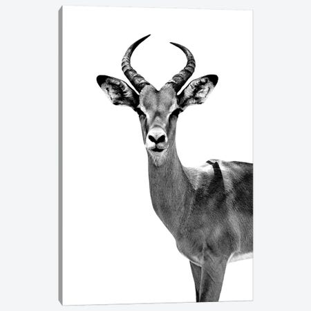 Antelope White Edition Canvas Print #PHD253} by Philippe Hugonnard Canvas Print