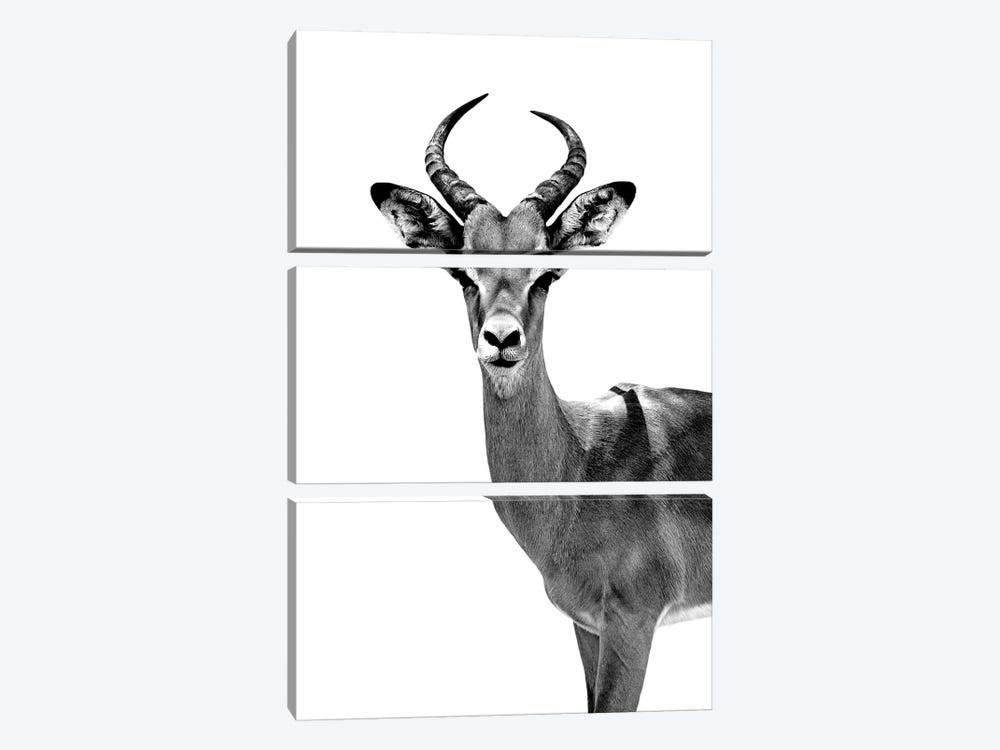 Antelope White Edition by Philippe Hugonnard 3-piece Art Print