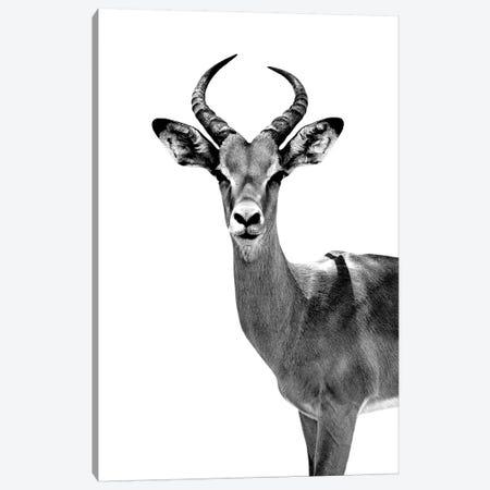Antelope White Edition Canvas Print #PHD253} by Philippe Hugonnard Canvas Print