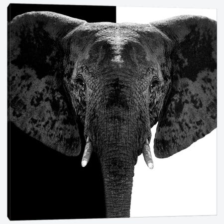 Elephant B&W IV Canvas Print #PHD254} by Philippe Hugonnard Canvas Wall Art