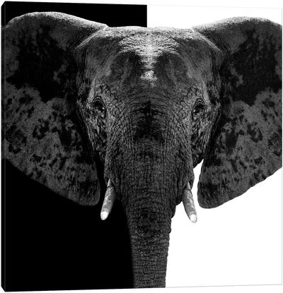 Safari Profile Series: Elephant B&W IV Canvas Print #PHD254