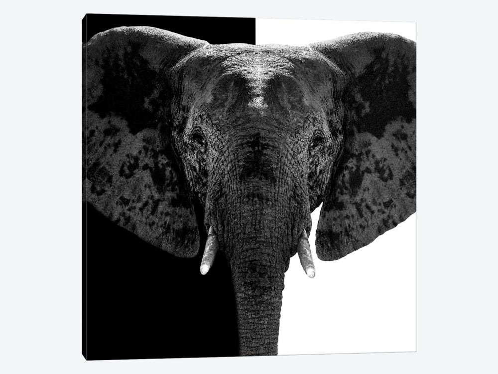 Safari Profile Series: Elephant B&W IV by Philippe Hugonnard 1-piece Canvas Wall Art