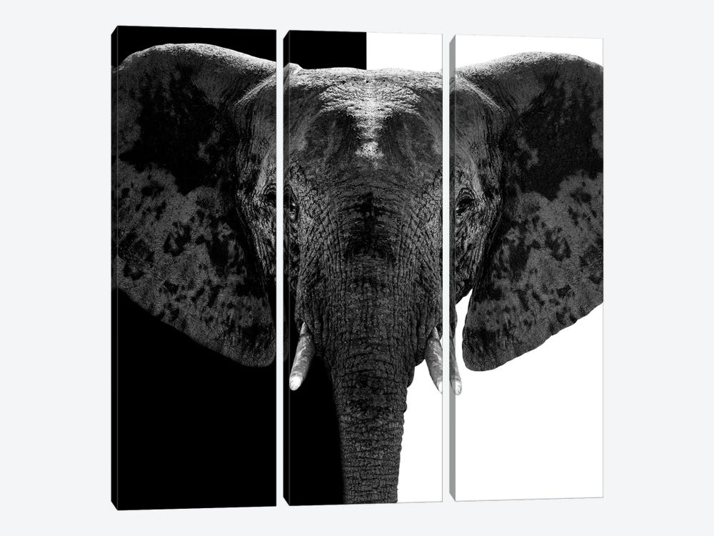 Safari Profile Series: Elephant B&W IV by Philippe Hugonnard 3-piece Canvas Artwork