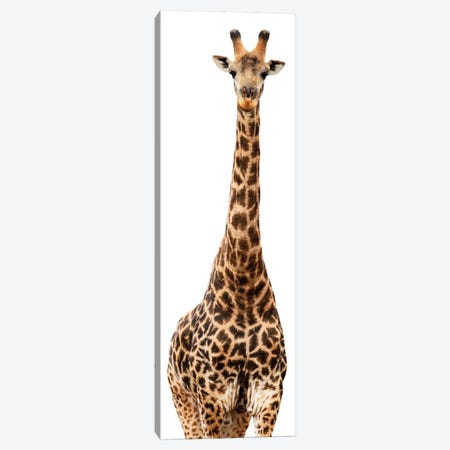 Giraffe White Edition III Canvas Print #PHD256} by Philippe Hugonnard Canvas Art