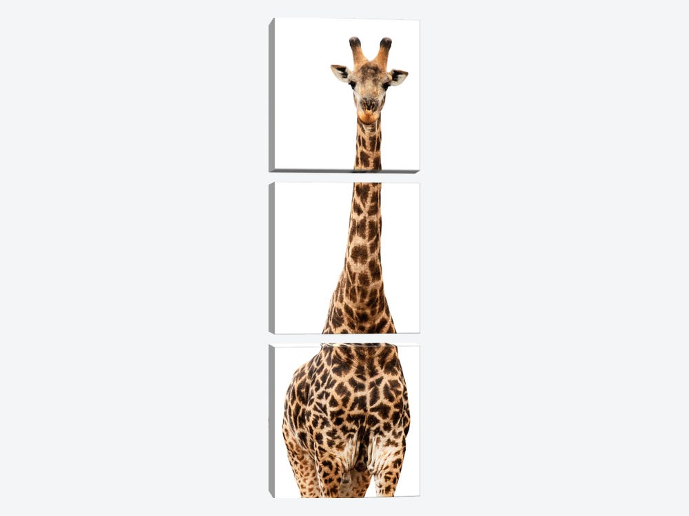 Giraffe White Edition III by Philippe Hugonnard 3-piece Canvas Wall Art