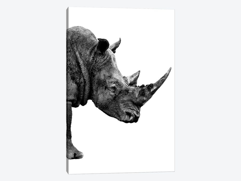 Safari Profile Series: Rhino White Edition IV by Philippe Hugonnard 1-piece Canvas Print