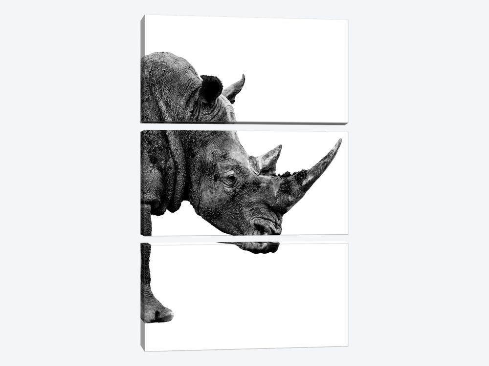 Safari Profile Series: Rhino White Edition IV by Philippe Hugonnard 3-piece Canvas Art Print