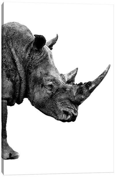 Rhino White Edition IV Canvas Art Print