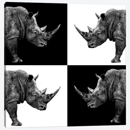 Rhinos II Canvas Print #PHD259} by Philippe Hugonnard Art Print