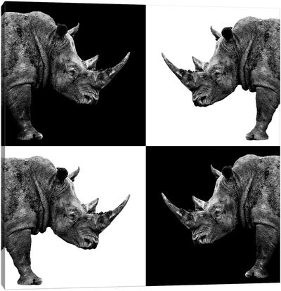 Rhinos II Canvas Art Print