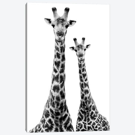 Two Giraffes White Edition II Canvas Print #PHD260} by Philippe Hugonnard Canvas Wall Art