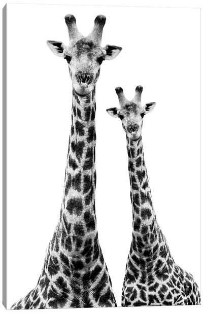 Safari Profile Series: Two Giraffes White Edition II Canvas Print #PHD260