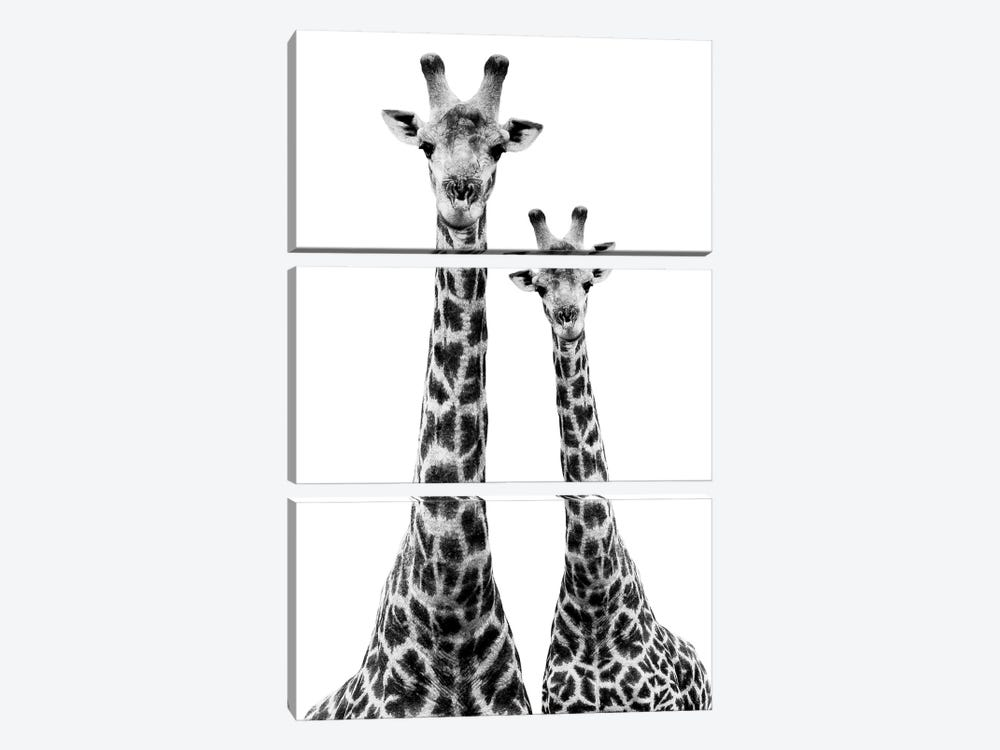 Two Giraffes White Edition II by Philippe Hugonnard 3-piece Canvas Art Print