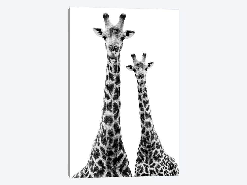 Two Giraffes White Edition II by Philippe Hugonnard 1-piece Canvas Art Print