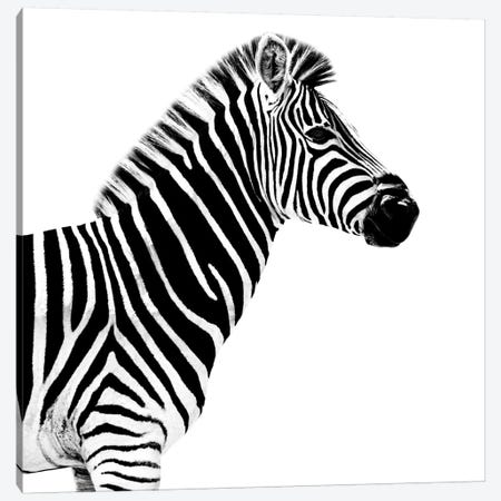 Zebra White Edition II Canvas Print #PHD261} by Philippe Hugonnard Canvas Artwork