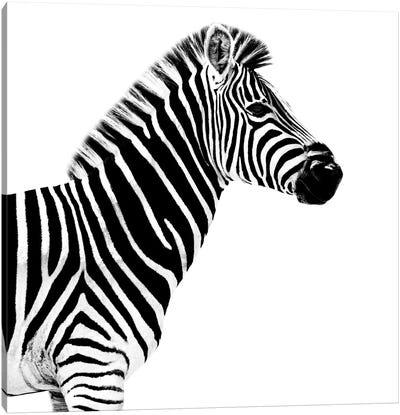 Safari Profile Series: Zebra White Edition II Canvas Print #PHD261