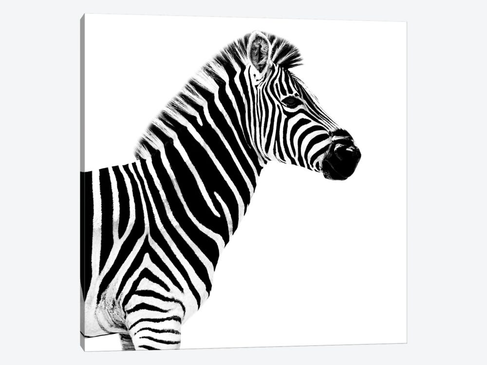Zebra White Edition II by Philippe Hugonnard 1-piece Canvas Wall Art