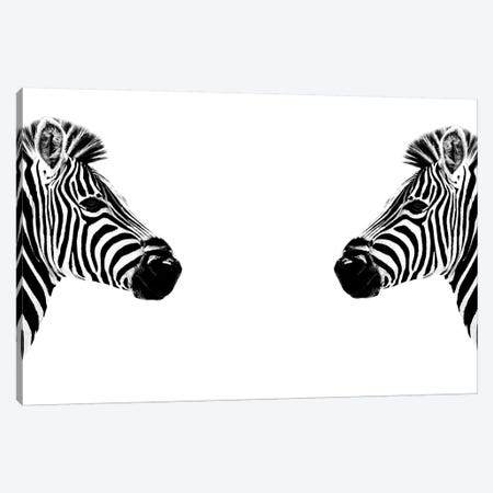 Zebras Face to Face White Edition Canvas Print #PHD262} by Philippe Hugonnard Canvas Wall Art