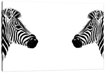 Zebras Face to Face White Edition Canvas Art Print