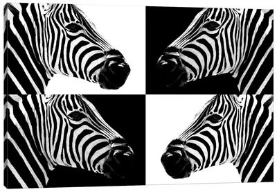 Safari Profile Series: Zebras III Canvas Art Print