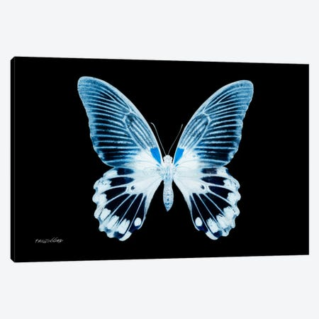 Miss Butterfly Agenor X-Ray (Black Edition) Canvas Print #PHD298} by Philippe Hugonnard Canvas Print