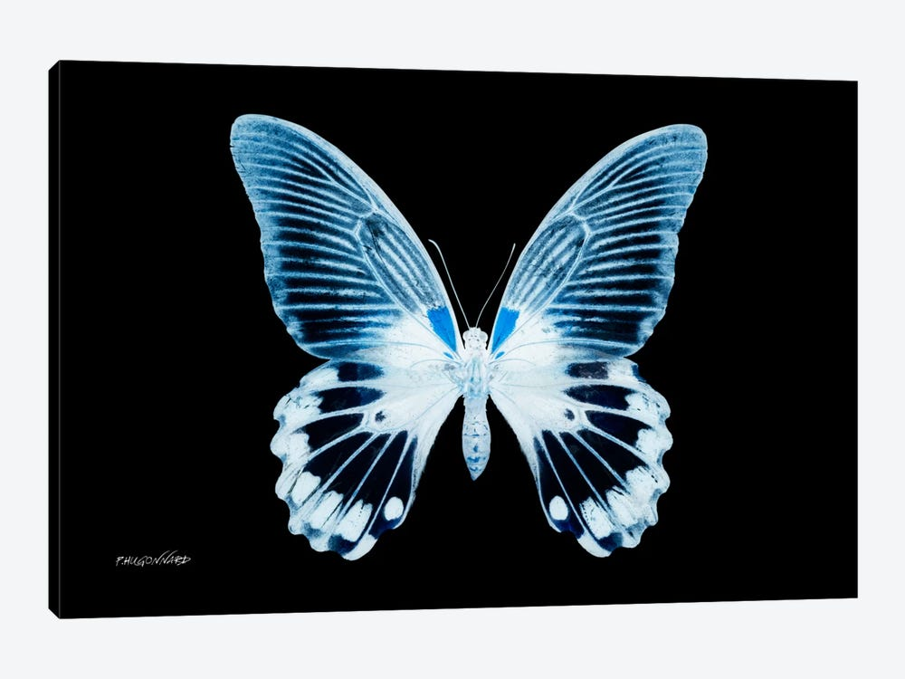 Miss Butterfly Agenor X-Ray (Black Edition) by Philippe Hugonnard 1-piece Canvas Art