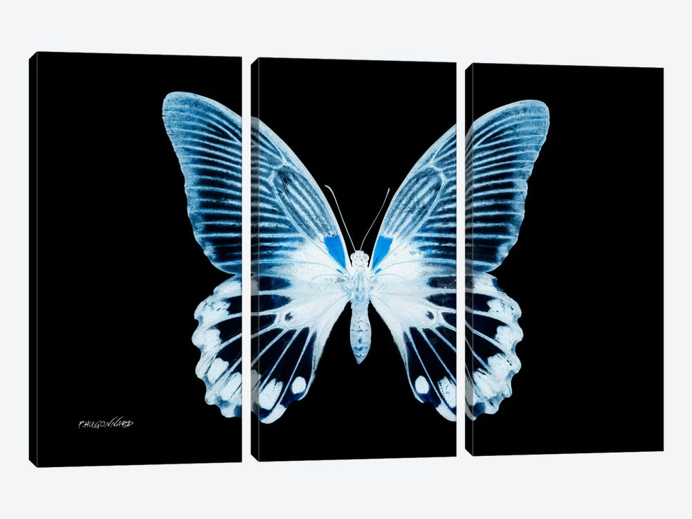 Miss Butterfly Agenor X-Ray (Black Edition) by Philippe Hugonnard 3-piece Canvas Artwork