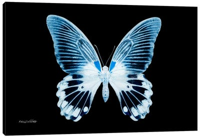 Miss Butterfly Agenor X-Ray (Black Edition) Canvas Art Print