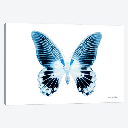 Miss Butterfly Agenor X-Ray (White Edition) Canvas Print #PHD299} by Philippe Hugonnard Canvas Art Print