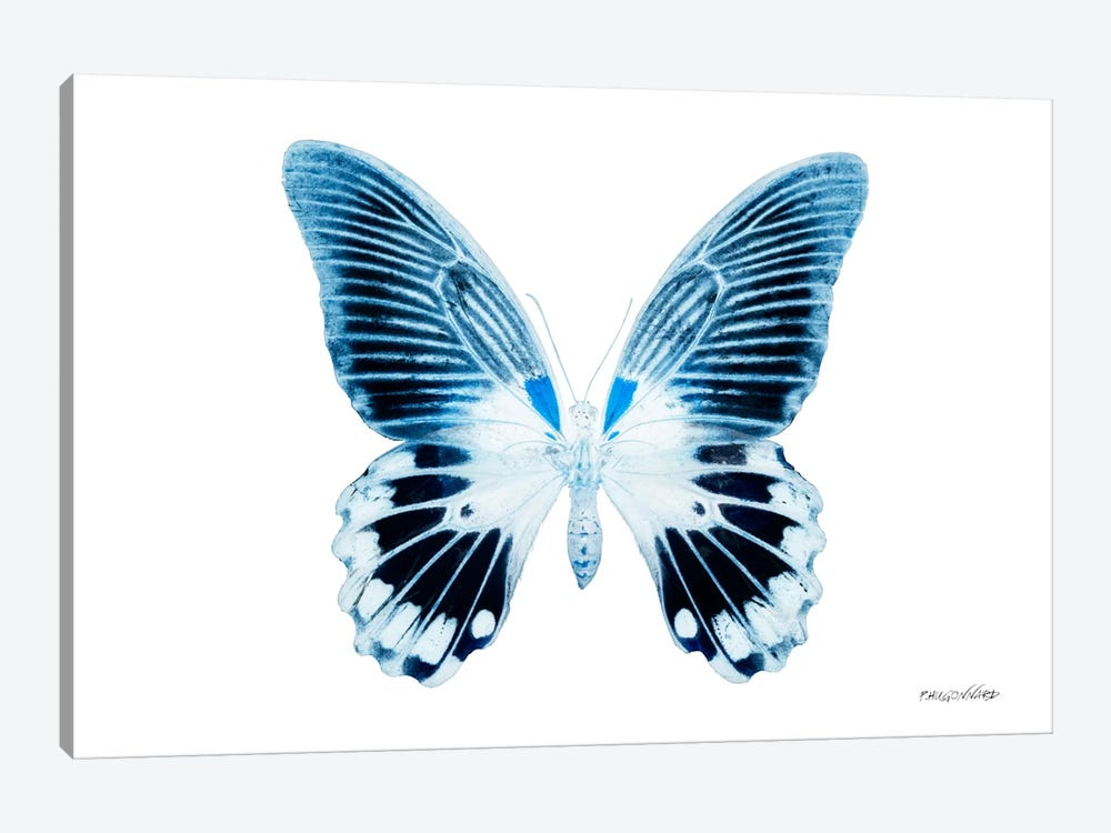 Miss Butterfly Agenor X-Ray (White Edition) by Philippe Hugonnard 1-piece Canvas Print