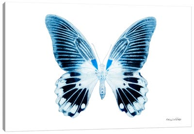 Miss Butterfly Agenor X-Ray (White Edition) Canvas Art Print