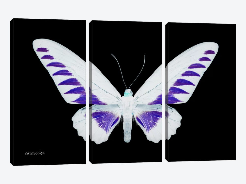 Miss Butterfly Brookiana X-Ray (Black Edition) by Philippe Hugonnard 3-piece Canvas Art