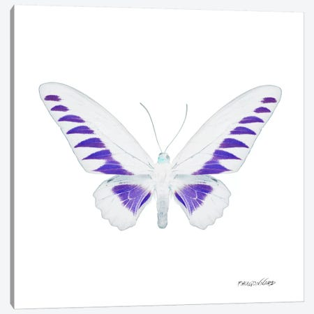 Miss Butterfly Brookiana X-Ray (White Edition) Canvas Print #PHD301} by Philippe Hugonnard Canvas Art Print