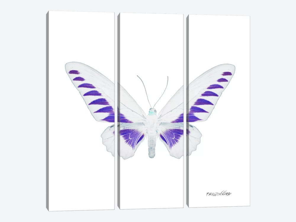 Miss Butterfly Brookiana X-Ray (White Edition) by Philippe Hugonnard 3-piece Canvas Art Print